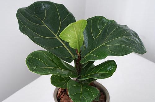 <b>趁着冬天还没到,赶紧选一些皮实好养的盆花,给家里补充点绿色!</b>