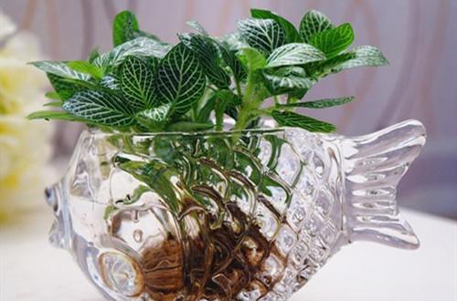 水培植物要怎么养护的方法
