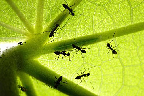 花盆中有蚂蚁怎么办?可以试用这
