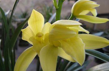 【建兰花】建兰花养殖方法_建兰花品种