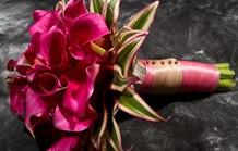 红色马蹄莲花语是什么?