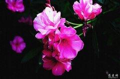 花友分享:哪些花不能在家里养?
