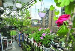 阳台绿化,都市新时尚