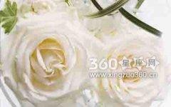 洛丽玛丝玫瑰花语以及传说故事
