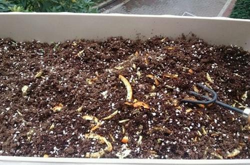 花卉种植养花用什么底肥 花卉用什么做底肥最好