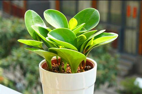 什么植物适合办公室养_小花盆适合养什么花小花盆适合养什么植物(图)_花匠网
